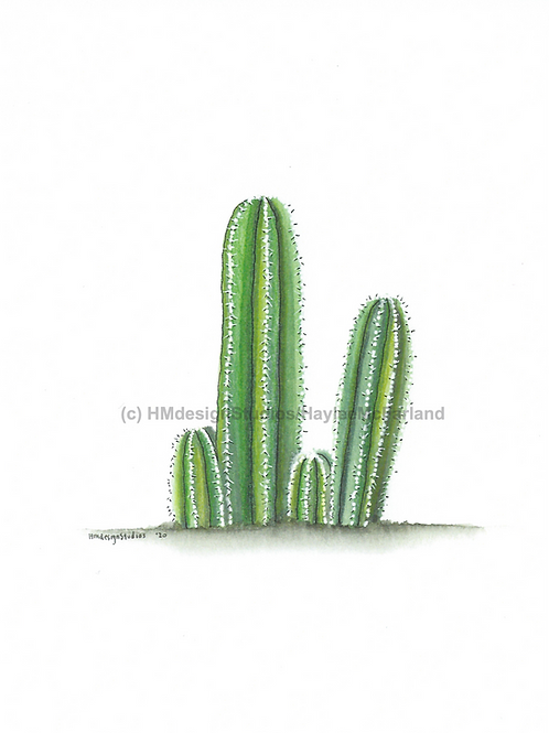Cactus Greeting Card, Watercolor and Pen & Ink by H.McFarland