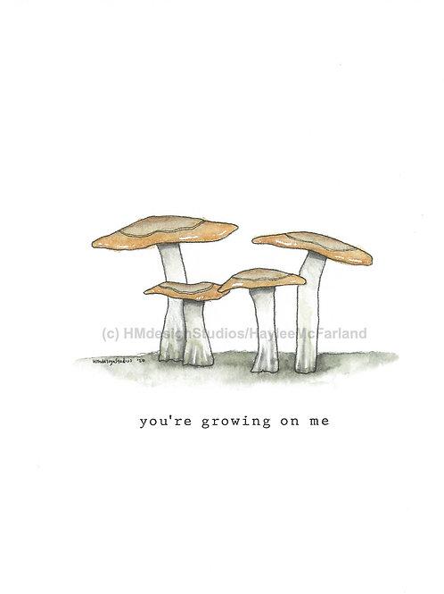 Brown Mushroom Greeting Cards, Watercolor and Pen & Ink by Haylee McFarland