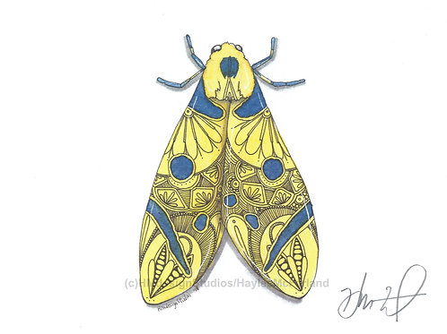 Moth PRINT Watercolor and Pen & Ink by Haylee McFarland