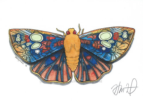 OrnateDusk-flat Redeye PRINT Watercolor and Pen & Ink by Haylee McFarland