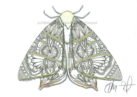 Swallow-Tailed Moth PRINT Watercolor and Pen & Ink by Haylee McFarland