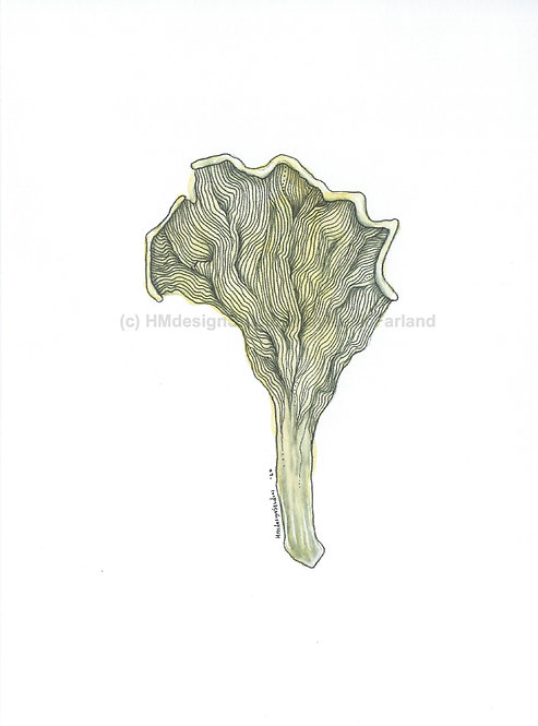 Chanterelle Mushroom Greeting Cards, Watercolor and Pen & Inkby Haylee McFarland