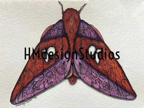 Pink Striped Oakworm Moth PRINT Watercolor and Pen & Ink by Haylee McFarland