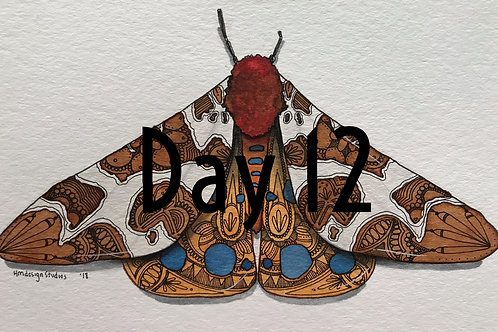 Garden Tiger Moth Watercolor and Pen & Ink by Haylee McFarland