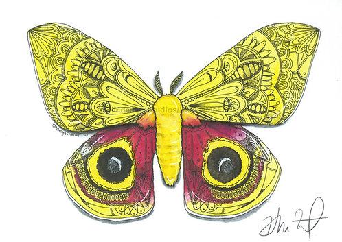 Moth PRINT Watercolor and Pen & Ink by Haylee McFarland