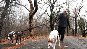 Syracuse lawyers volunteer to save their clients' lives: One dog at a time.