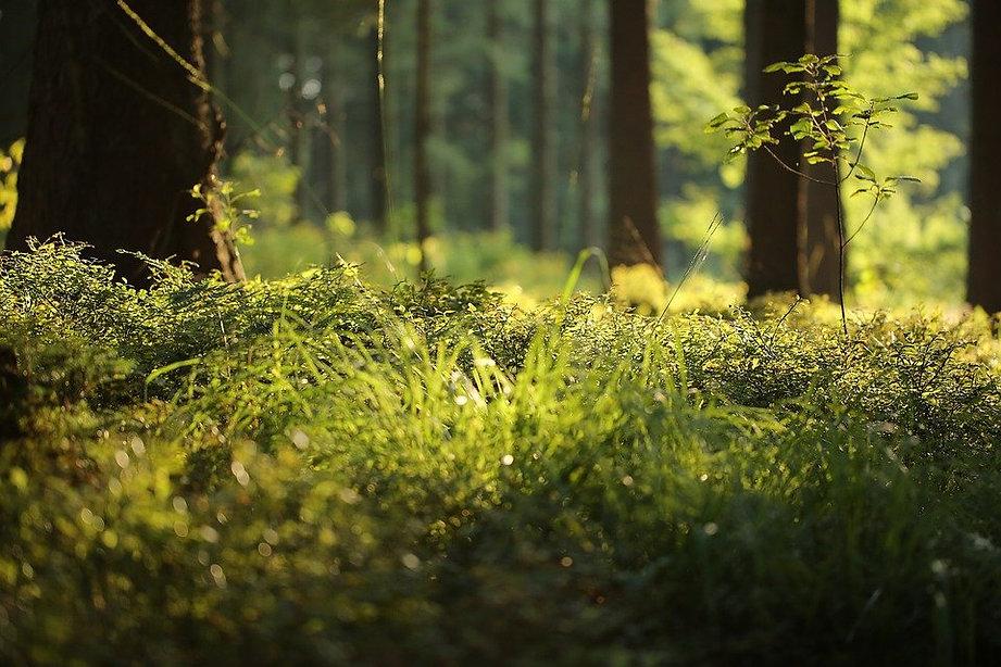 forest-floor-4700814_960_720.jpg