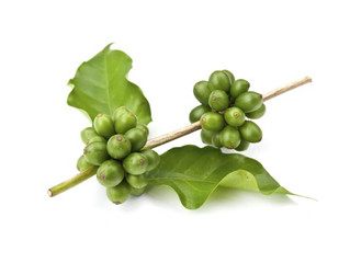 Los beneficios del café verde para la salud
