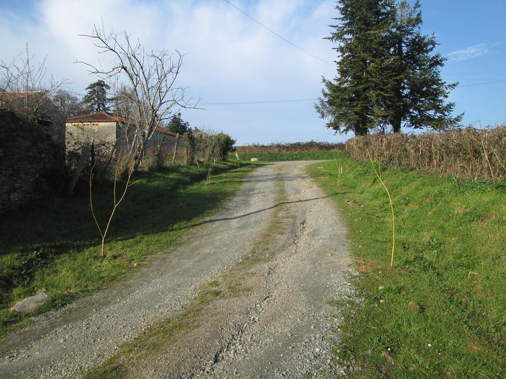 Living and revovating in France  10.JPG
