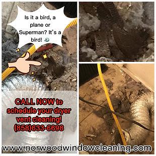 Dryer vent debri buildup, bird found inside