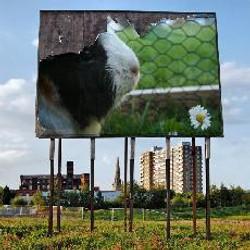 flocke-poster