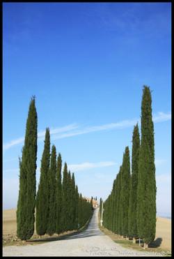 Siena2011