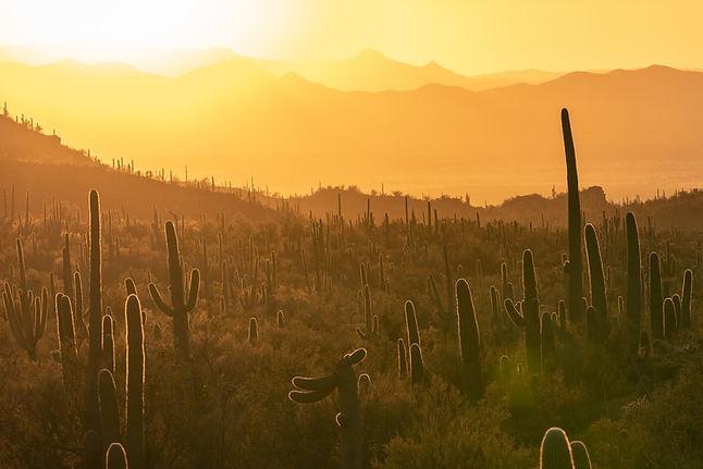 Good arizona cacti.jpg