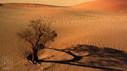 Dunes vue du ciel (montgolfière) près de Sossusvlei - Désert du Namib