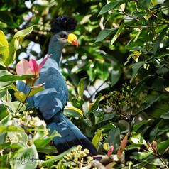 Oiseaux en Côte d'Ivoire