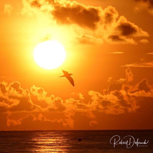 Sunset - Birds Island - Seychelles