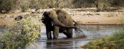 Eléphant d'Afrique - Etosha