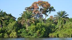 Les bords de lagune
