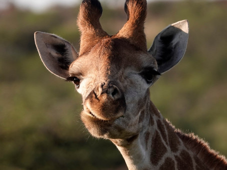 Animaux en Afrique