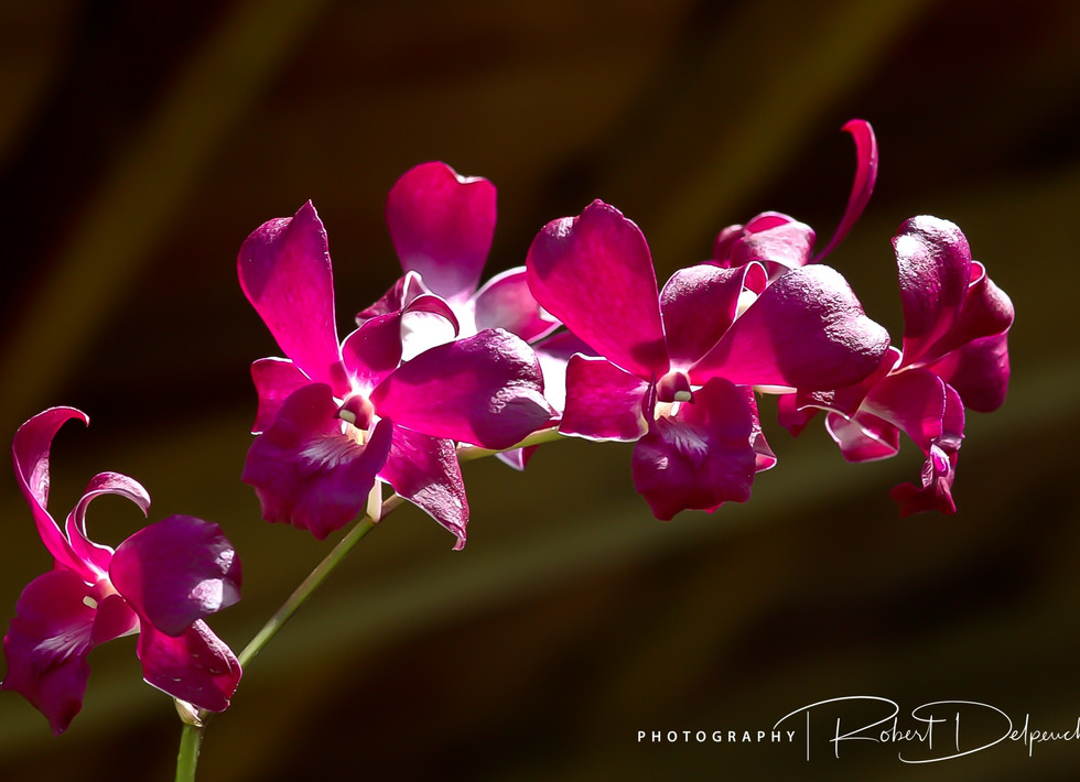 Orchidées-14.jpg