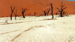 Vallée de la mort près de Sossusvlei, désert du Namib