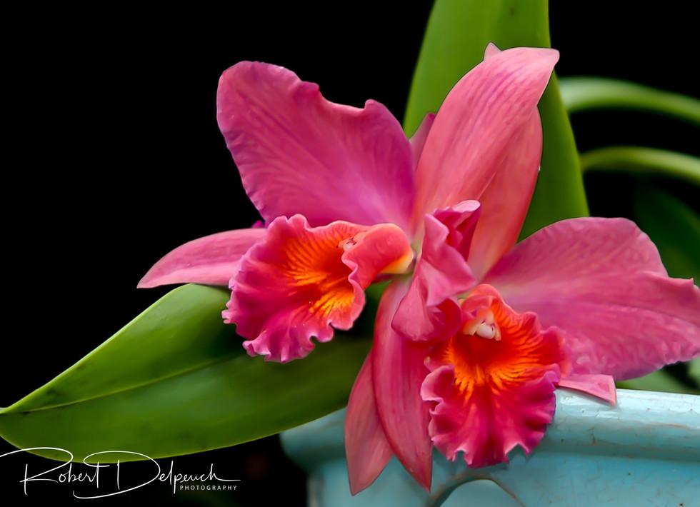Orchidée-2.jpg