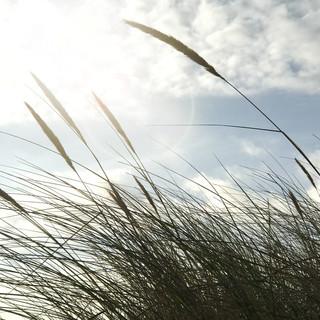 Subtle grasses
