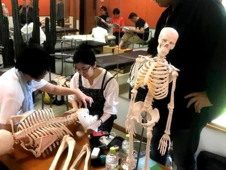 オステオパシー誇張法名古屋クラス第5期入門クラス募集中