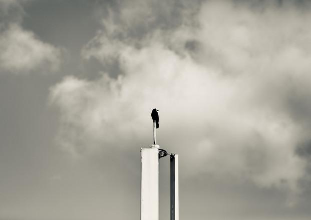 Hammer street crow 2