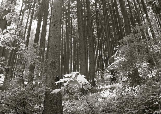 Schwarzwald (DE), 2012