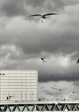 Flying gulls 1