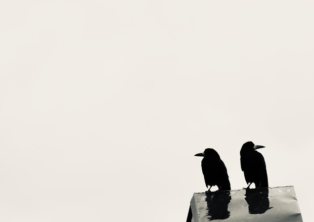 A pair of Hammer street crows 2