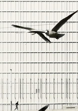 Flying gulls 2