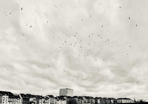 Flying gulls 3
