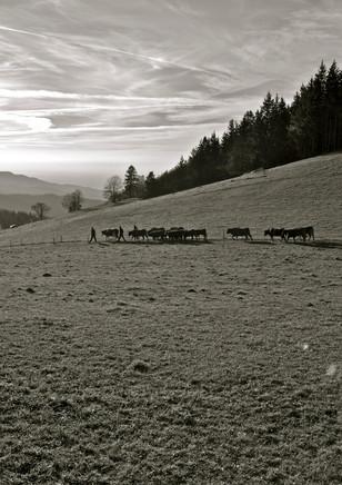 Schwarzwald near St. Ulrich (DE), 2012