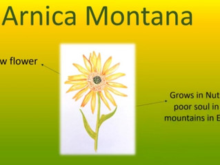 Homeopathic Arnica Youtube video for bruising and injuries.