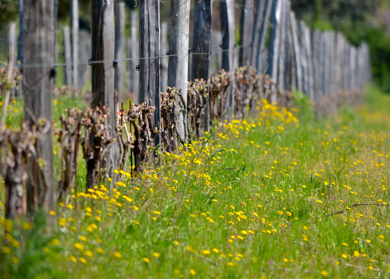 spring vines, yellow flowers