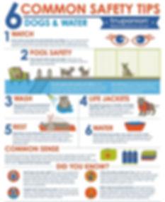 Corgi Water Safety Tips