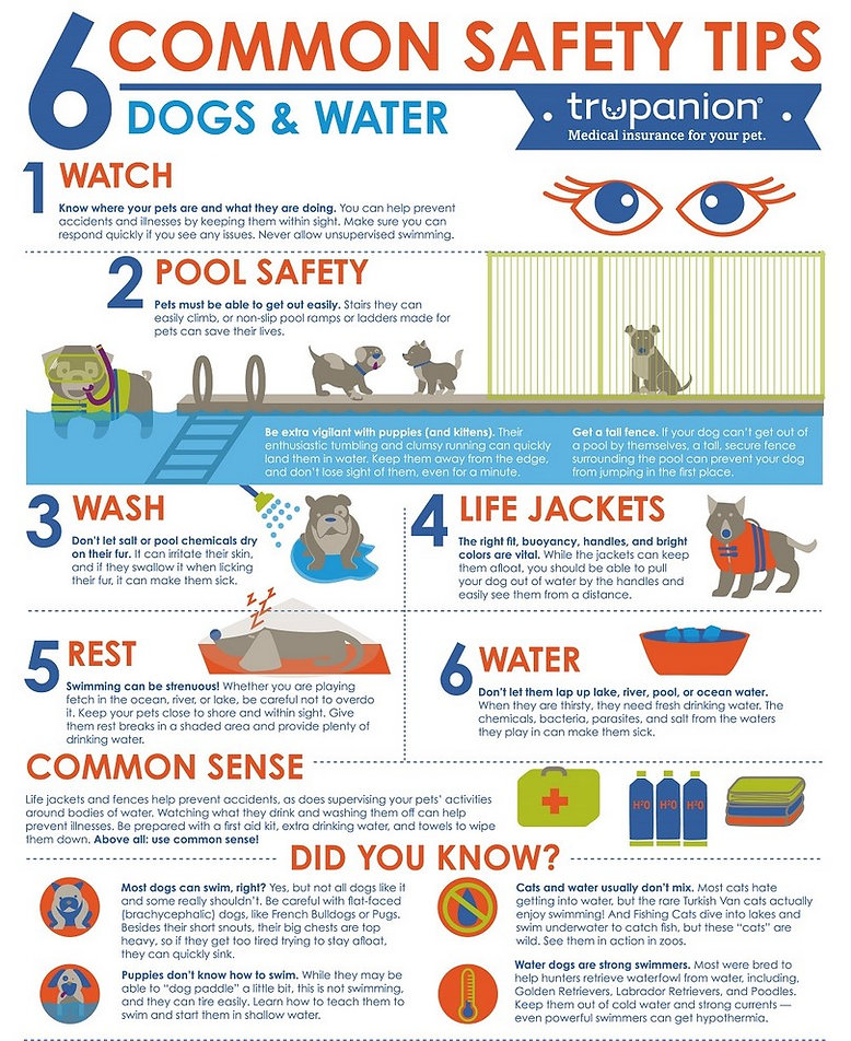 Corgi Water Safety Tips