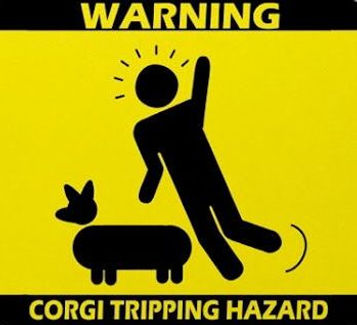 Corgi Tripping Hazard