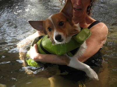 Corgi Swim Exercise