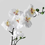 fejka-artificial-potted-plant-orchid-whi