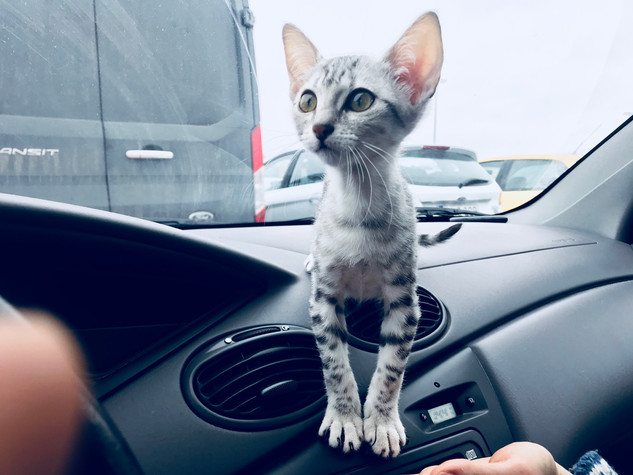 Moses had some kind of eating disorder in the beginning, so he was a tiny gremlin when we drove home