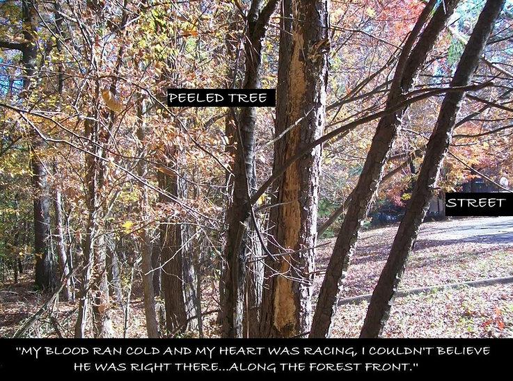 Peeled trees