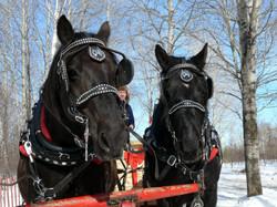 eric cheval 7