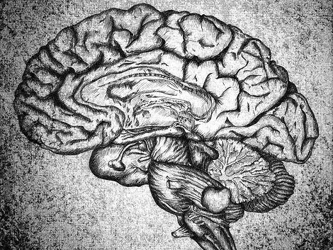 Brain%2520Sketch_edited_edited.jpg