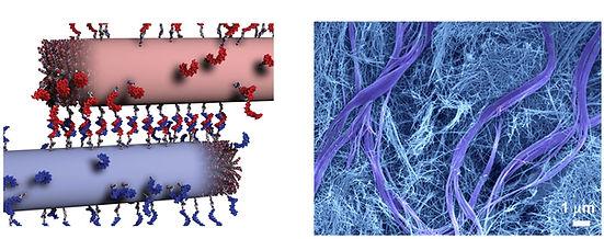 2018 Science PA-DNA.jpg