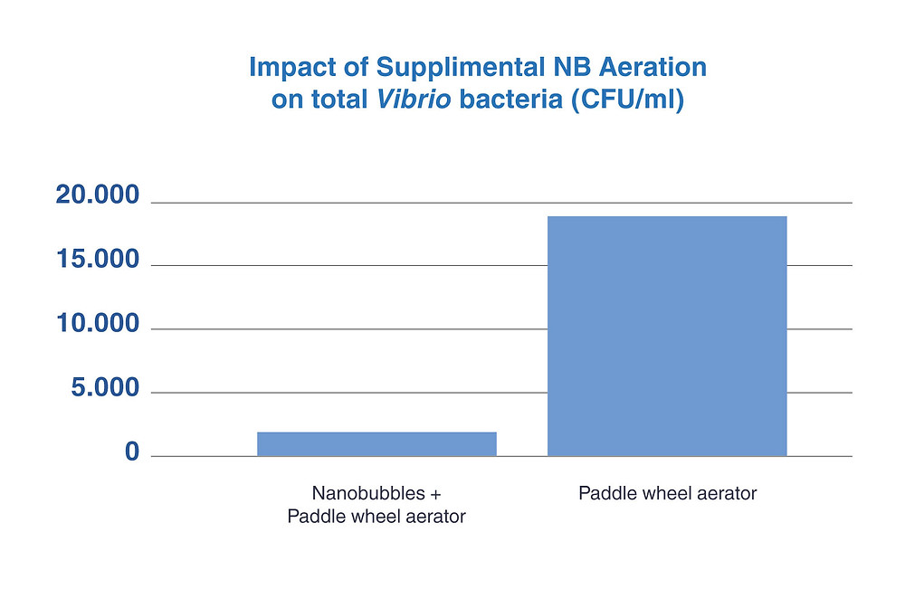 Nanobubbles Aeration Australia Vibrio bacteria