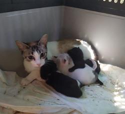 Mutter mit Babies