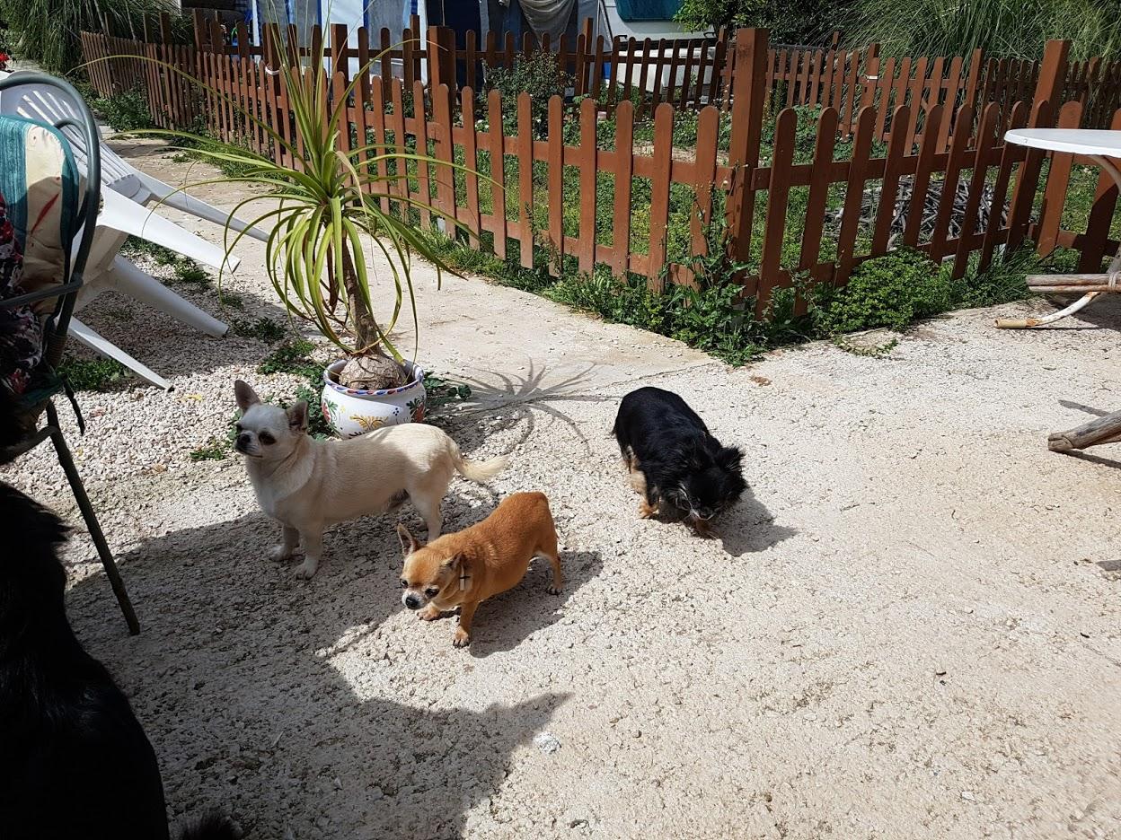 Gordito, Mary und Luna